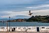 El muelle de Luanco (ccc.39) Tags: asturias luanco costa muelle cantábrico gaviota vuelo gente