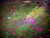 Follen Red (atria2718) Tags: japan nippon kyoto moss petals green red 日本 京都 苔 花びら サザンカ flower tree light shadow 光 影 sazanka