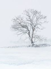 Booze Snow (matrobinsonphoto) Tags: booze arkengarthdale slei gil ghyll north yorkshire dales national park snow blizzard white out snowy wind weather winter wintry scene field tree lone wall stone minimalist minimal space blank uk landscape outdoors countryside nature natural