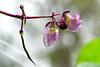 rain drops (luporosso) Tags: natura nature naturaleza naturalmente nikond500 nikonitalia germogli shoots fiori fiore flowers flower flor flores gocce drops raindrops gotas
