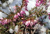 IMG_6891 (Usagi93190) Tags: macro flower biltmore estates greenhouse gardens ashville north carolina