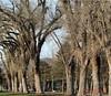 Waiting for spring (zairakhan) Tags: trees winters libertypark utahusa saltlakecity