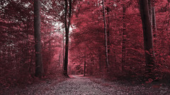 Is it all as it seems (PhotonenBlende) Tags: forest wald path weg leaves blätter fall herbst light licht tree baum red rot wood holz nature natur art fineart kunst hdr nikon d7200 sigmaex outdoor landscape fabolous surreal abstract