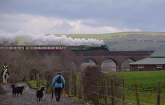 Locomotive No.60163 'Tornado', passing over Roch Viaduct at Bury, heading to Heywood,with the non-stop 09.55 service from Rawtenstall. East Lancs Railway 30 03 2018 (pnb511) Tags: steam engine loco locomotive train track 462 pacific eastlancsrailway dogs people horse bridge viaduct arches sky hills trees