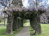 The Pergola with Wisteria (Melinda Stuart) Tags: wisteria structure architecture garden landscape tradition pillars stone wood framework vine spring oakland ca cemetery formal glycine