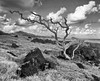 Driftwood and Lava Rocks_Maui Shoreline (Ken'sKam) Tags: driftwood rocks lavarocks sea seascape seaside shoreline island clouds maui hana hawaii bw blackandwhite landscape sky