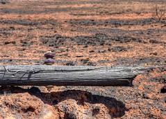 2018 - Disaster Relief - Vici, Oklahoma Wildfires (zendt66) Tags: zendt66 zendtd nikon d7200 bgco sbdr southern baptist disaster relief vici oklahoma wildfire fire destruction christian volunteers remediation hdr photomatix