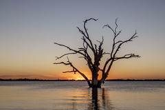 Lake Bonney - Australië (wietsej) Tags: lake bonney australië rx10 iv rx10m4 sunset dead tree sony rx10iv