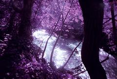 stream. (shoegazer.) Tags: lomo lca lomochrome purple analog film photography california losgatos 2017 hike nature outdoors stream trees water light shadows silhouettes glare