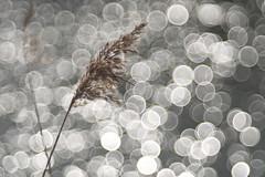 Bokeh Xtreme :-) (Stefan Zwi.) Tags: bokeh pond teich reflexion see wasser licht light sunny sonne water diaplan meyergörlitz 100mm reflection ngc npc