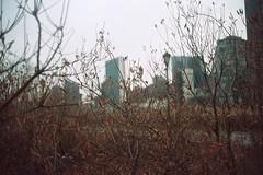 roosevelt island (calvineous) Tags: canonet giii ql17 portra160vc 35mm nyc analog film bokeh