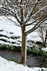 Photos Marco BP (5)_GF (marcbihanpoudec) Tags: bretagne neige plabennec plan deau lac banc arbres