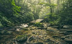Primeval Forest (R. Keith Clontz) Tags: primeval forest lush green verdant brook creek boulder rhododendron mist misty fog foggy summer summertime northcarolina beautiful