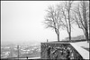 Le Mura (Guido Colombini) Tags: winter bergamo bw mura panorama tree bianconero snow