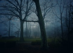 A cold winter morning (Rupam Das) Tags: winter usa armonk nature morning cold tree silhouette fog cloudy green forest picturesque scenic bare sunrise earth magnificent mesmerizing newyork
