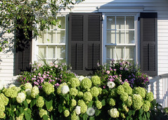 Cape Cod Living (urvesphotography) Tags: flora hydrangea flowers porch homes cape cod edgartown massachusetts boston usa