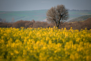 Thrace is yellow in both spring and summer