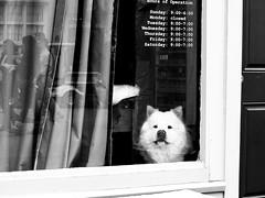 (STREET MASTER) Tags: dallas deepellum deepellumartsfestival dog dogs texas mainstreet street candid streetphotography dallasstreetphotography monochromatic