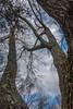 DSC00157 (johnjmurphyiii) Tags: 06416 clouds connecticut cromwell originalarw shelly sky sonyrx100m5 spring usa yard johnjmurphyiii