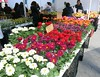 Earth Day Colours - New York Ecology (Pushapoze (NMP)) Tags: newyorkcity flowers plants earthday ecology amishmen
