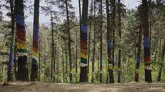 Omako Baso Margotua / Painted Forest of Oma (Raul Piki Bolukua) Tags: paint painted forest tree landscape nature ibarrola kortezubi sunday art landart