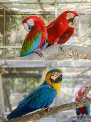 parrot (abtabt) Tags: trinidadandtobago tt portofspain pos zoo animal parrotbird d70085f18 bird parrot caribbean