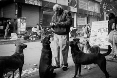 Chai Dogs (*trevor) Tags: asia biscuit delhi dog feeding fujifilm india travelphotography xt2 littledoglaughednoiret littledoglaughedstories