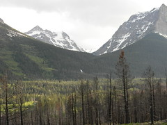 Glacier 7 (GAWV) Tags: montana flatheadriver glacier mountains beauty buffalo river water bigsky