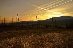 Sunrise in Wineyard (Gerald Lang) Tags: sonyalpha7ii schwarzwald weinreben sonnenaufgang blackforest forêtnoire sonyilce7m2 sunrise leverdusoleil vineyards weinberg import25032018
