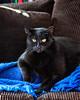 King Lenny (lennycarl08) Tags: lenny lc cat cats blackcats kitty