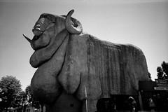 Big Merino (sturkster) Tags: australia australie nsw noiretblanc bw blackwhite monochrome goulburn statue publicart bigmerino