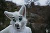 DSC_0216 (BerionHusky) Tags: fursuit mascot costume monschau furry fur