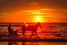 Riding into the sunset...  Beach of Duinrell, Netherlands. (nigel_xf) Tags: duinrell netherlands niederlande beach strand küste coast nordsee northsea sunset sonnenuntergang stimmungsoll moody riding reiten pferd horse nikon nigel nigelxf vsfototeam dutch
