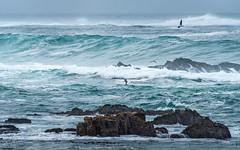 Keepaway (59roadking - Jim Johnston) Tags: ifttt 500px horizon over water coastline seascape beach sea surf wave coastal feature ocean rocky gulls california asilomar