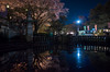 Tsuruma-Park, Tsurumai, Showa-ku, Nagoya (kinpi3) Tags: 名古屋 japan nagoya night cityscape tsurumai 夜桜 鶴舞 鶴舞公園 ricoh gr
