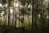 Réveil avec le soleil à la maloca de Taita Gonzalo Criollo (kgerbel) Tags: amanecer backlight bois bosque brouillard brume contrejour fog forest foret haze landscape leverdesoleil madera mist neblina niebla paisaje paysage sunrise wood