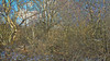 20180402_163720_f (wos---art) Tags: bildschichten wald sträucher bäume äste fusweg wildwuchs natur natürlich gewachsen