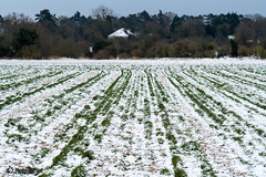 Snow photography from the third post big field Stoke Poges Buckinghamshire (Photo 10 KH) Tags: photo10kh photography10kh 10000 hours deliberate dedicated practice learning art photography mastery masteringphotography landscapephotography