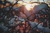 #179 - Winter abstract #1 / Abstraktní zima #1 (photo.by.DK) Tags: winter wintermood winterabstract winterabstraction abstract sunset wintersunset oldlens legacylens manuallens manualfocus manual manualondigital pancolarauto5018mc pancolar50 pancolarauto pancolar pancolarauto50 pancolar5018 czj czjpancolar carlzeiss zeiss zeisslens bokeh bokehlicious beyondbokeh sonya7 sonyilce sony sonya7ii sonyalpha wideopen shotwideopen artbydk photobydk