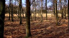 Groningen: Ter Borg nature reserve (Henk Binnendijk) Tags: groningen netherlands nederland westerwolde holland dutch country terborg natuurgebied staatsbosbeheer ruitenaa naturereserve heide