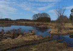 Nature reserve Buurserzand (joeke pieters) Tags: 1380779 panasonicdmcfz150 buurserzand natuurgebied naturereserve natuurmonumenten twente overijssel nederland netherlands holland landschap landscape landschaft paysage nat wet