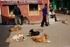 relax on road (Samir D) Tags: canon calcutta kolkata kolkatastreet kumartuli samird streetphotography street streetshot eos 35mm14 35mm 2018 india incrediblebengal indian dog people five westbengal bangla northkolkata