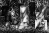 In Shadow and Light (Torsten Reimer) Tags: grabsteine newjewishcemetery friedhof czechrepublic europa tschechien czechia cemetery trees gravestones graveyard schatten shadows prag graves grabmal schwarzweis europe prague blackandwhite cz