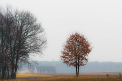 misty morning (iwona.kilichowska) Tags: trees tree rural countryside landscape misty foggy morning day spring scenery poland lubelskie