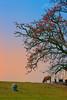 _U1H1027.0318 Miếu Bà Cô,Lãng Sơn,Yên Dũng,Bắc Giang (HUONGBEO PHOTO) Tags: câygạobắcgiang mùahoagạobắcgiang bắcgiang yêndũng xãlãngsơn vietnamscenery asian redsilkcottontree photography peaceful countryside outdoor