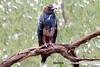 _DSC3692 (K S Kong) Tags: kite margaretriver western australia song100400mmf4556gmoss