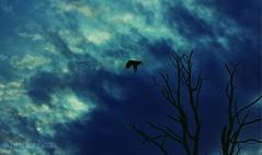Mood (heatherpierce2) Tags: capecod trees blue mood birds