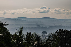 Hazy African Landscape (tomi.a) Tags: uganda kampala africa haze hazy mist morning sunrise clouds landscape fog hill hilly scenics idyllic horizon d850 skyline outlook nature travel daylight scenery view environment grey sky tree forest leafs beautiful