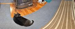 Yuba's Perspective (sjrankin) Tags: 15march2018 edited animal cat yuba heater kitchen floor distorted carpet rug yubari hokkaido japan