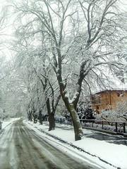Winter is back this weekend (mutos21) Tags: winter zima snow śnieg city street ulica wintetlandscape wrocław trees drzewa biały
